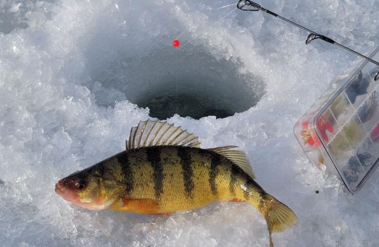 сезоны рыбалки на окуня