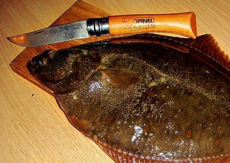 Особенности выбора ножа для рыбалки и разделки рыбы