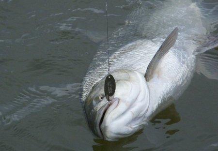 Особенности рыбалки в Астрахани осенью