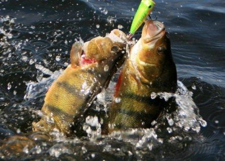 Некоторые правила охоты и рыбалки в Астраханской области