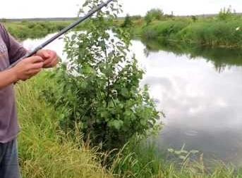Чем полезна рыбалка