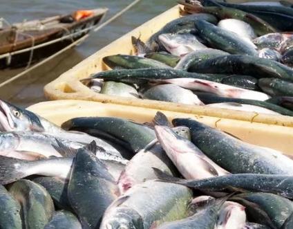 Рыбалка на Дальнем Востоке