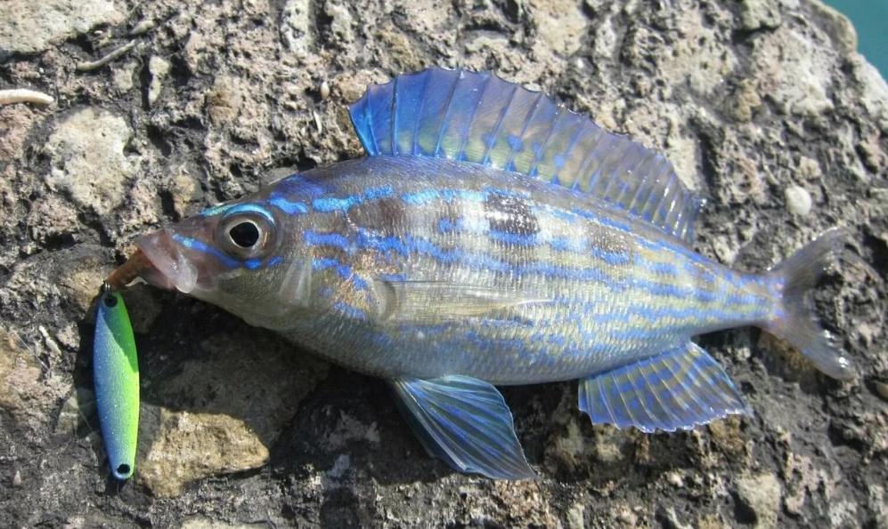 Рыбалка на морского окуня в Крыму